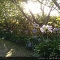 0705清境的清晨之美 (3).jpg