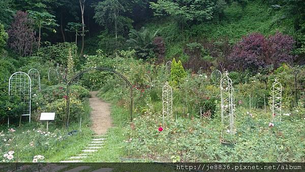 0705苗栗雅聞玫瑰花園 (5).jpg