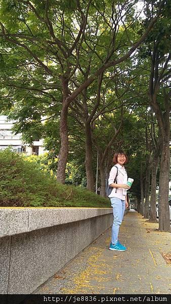 0905林口行道樹 (2).jpg