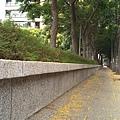 0905林口行道樹 (4).jpg