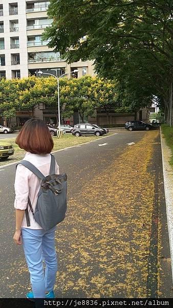 0905林口行道樹 (5).jpg