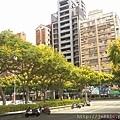 0905林口行道樹 (9).jpg