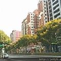 0905林口行道樹 (19).jpg