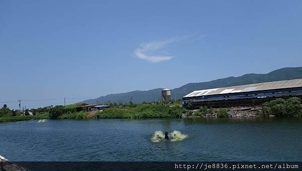 0820立川魚場1.jpg