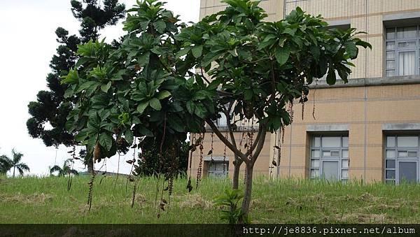 0820東華大學31.jpg