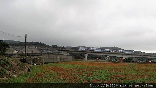 1102蘆竹花海節28.jpg