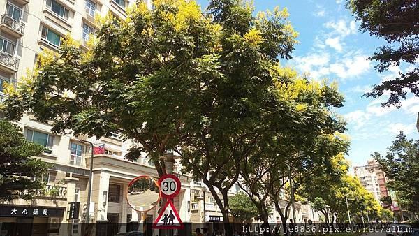 0916欒樹步道1.jpg