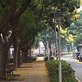 0921欒樹步道4.jpg
