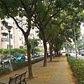 0921欒樹步道7.jpg
