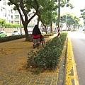 0921欒樹步道10.jpg