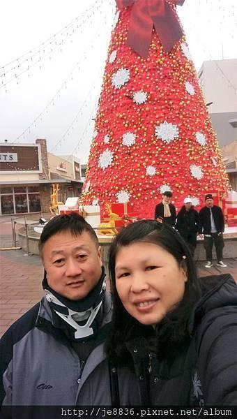 1219華泰聖誕樹 (4).jpg