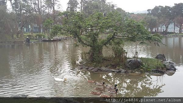1231大湖公園15.jpg
