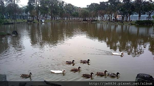 1231大湖公園17.jpg
