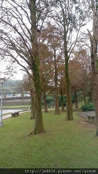 1231大湖公園23.jpg