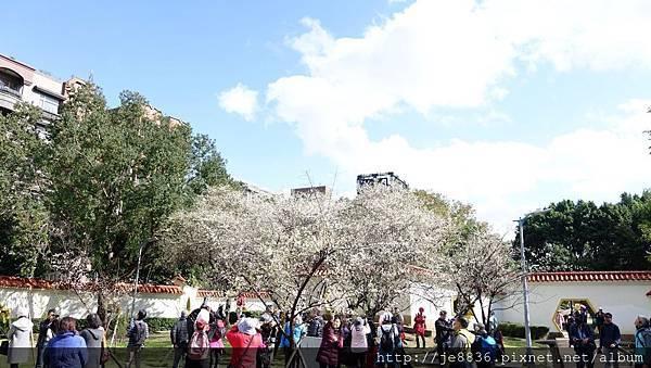 0113志成公園1.jpg