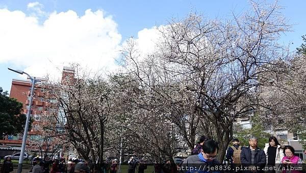 0113志成公園12.jpg