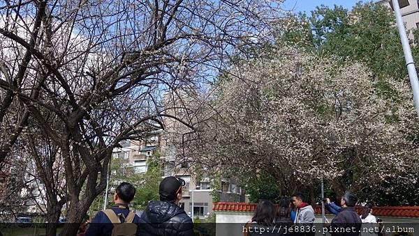 0113志成公園13.jpg