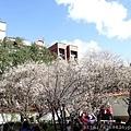 0113志成公園16.jpg