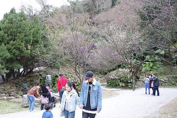 2017一月的陽明山一日遊 (62).jpg