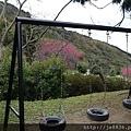 0121紅薔薇75.jpg