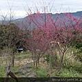 0121紅薔薇40.jpg