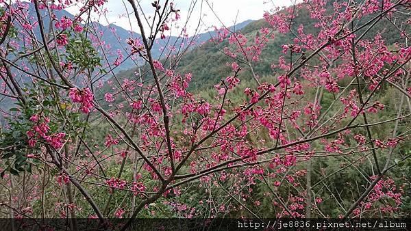 0121紅薔薇47.jpg