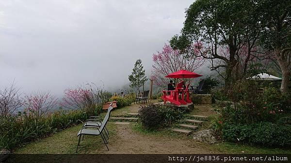 0121紅薔薇68.jpg