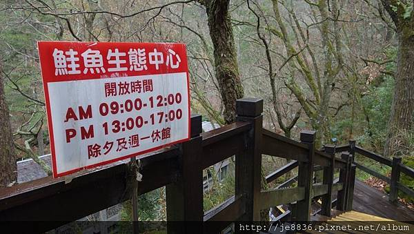 0128武陵賞花一日遊70.jpg
