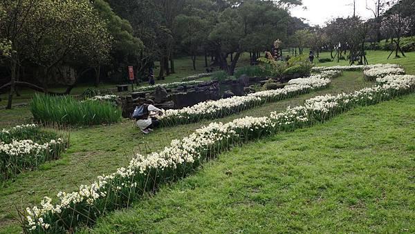 03020218陽明山花季3.jpg