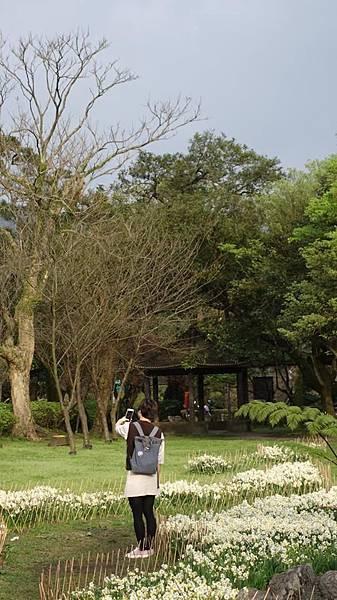 03020218陽明山花季8.jpg
