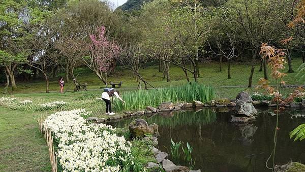 03020218陽明山花季6.jpg