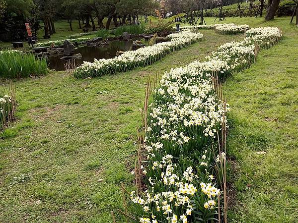 03020218陽明山花季14.jpg