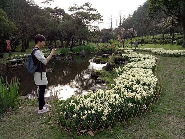 03020218陽明山花季15.jpg