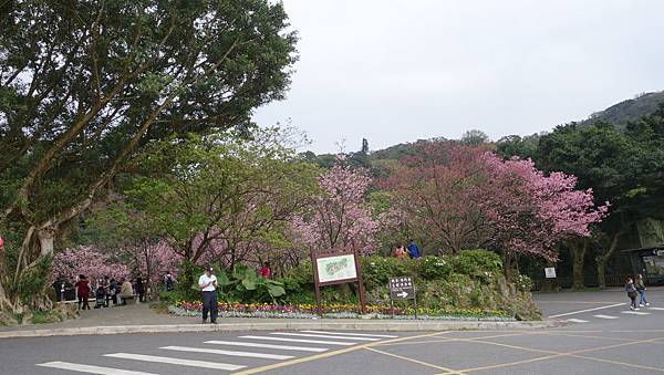 03020218陽明山花季32.jpg