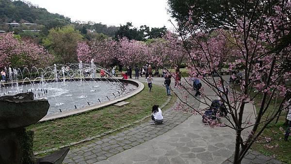 03020218陽明山花季34.jpg