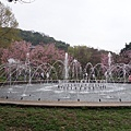 03020218陽明山花季37.jpg