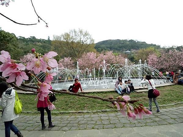 03020218陽明山花季38.jpg
