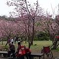 03020218陽明山花季39.jpg