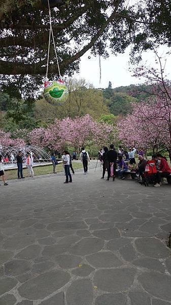 03020218陽明山花季40.jpg