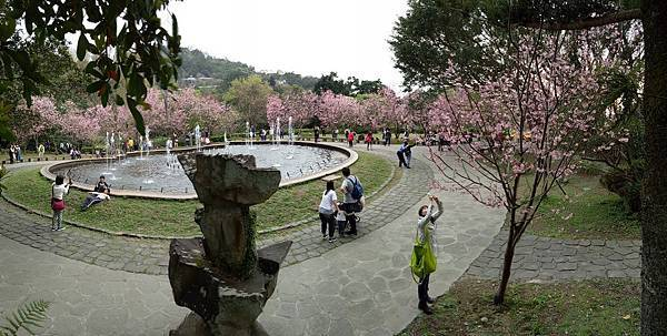 03020218陽明山花季46.jpg