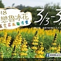 0301魯冰花1.jpg