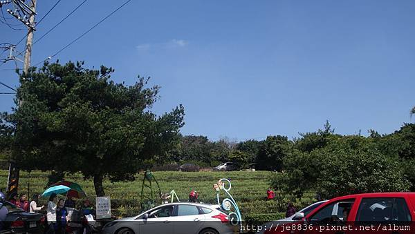 0301魯冰花3.jpg