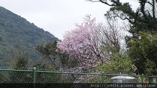 0302竹子湖 (2).jpg