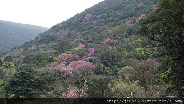 0302竹子湖 (3).jpg