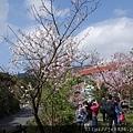 0302竹子湖 (9).jpg