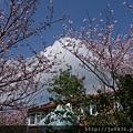 0302竹子湖 (12).jpg