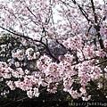 0302竹子湖 (15).jpg
