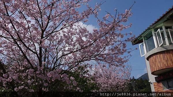 0302竹子湖 (14).jpg