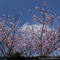 0302竹子湖 (17).jpg