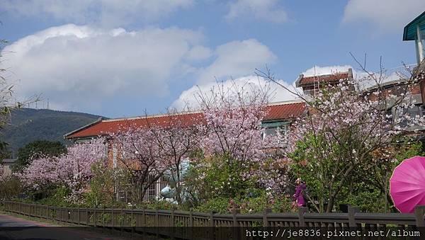 0302竹子湖 (21).jpg